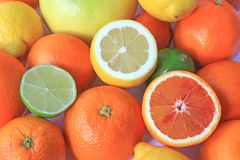 Various citrus fruits Royalty Free Stock Image