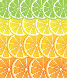 Various Citrus Slices Royalty Free Stock Photos