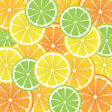 Various Citrus Slices Stock Image