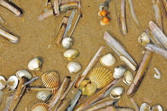 Various Clams and Shells on a Beach in Normandy, France Royalty Free Stock Photo