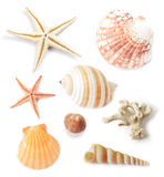 Various collection of sea shells. Various collection of sea shells with coral and starfish on white background Stock Image