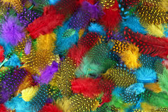 Various  color feather background Royalty Free Stock Photography
