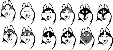 Various color options head husky Royalty Free Stock Photo