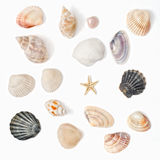 Various color shell Royalty Free Stock Photo