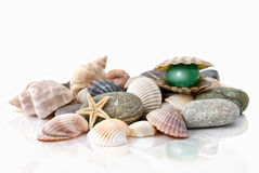 Various color shells with stylized pearl Stock Images