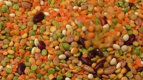 Various colorful dried legumes. Variety of pulses essential for human life: beans, peas, lentils stock video footage
