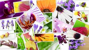 Various colorful flowers collage Royalty Free Stock Images