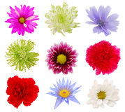 Various colorful Flowers Stock Photos