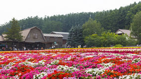 Various colorful flowers fields at Tomita Farm, Furano, Hokkaido. Various colorful flowers fields in front of greenhouse and many tourists in the background at stock photo