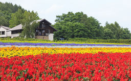Various colorful flowers fields at Tomita Farm, Furano, Hokkaido. Furano, Hokkaido, Japan – July 30, 2015: Various colorful flowers fields in front of royalty free stock photos
