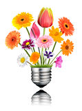 Various Colorful Flowers Growing out of Light Bulb Screw Royalty Free Stock Photos