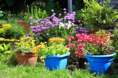 Various colorful flowers in the home garden. In the sunshine Royalty Free Stock Photo