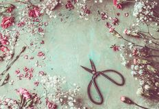 Various colorful pastel garden flowers, petals and leaves on aged background with scissors, top view Stock Photography