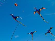 Various Colorful Pterodactyl Kites Stock Photos