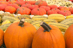 Various colorful pumpkins arranged for a halloween feast Royalty Free Stock Photos