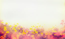Various colorful spring flowers sunlight, blur, banner for web site, border. Various colorful spring flowers in sunlight, blur, banner for web site, border royalty free stock images