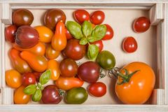 Various colorful tomatoes and basil leaves  in a wooden box on white wooden table. stock images