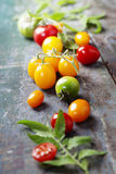 Various of colorful tomatoes Royalty Free Stock Image