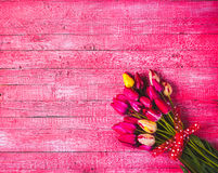 Various of colorful tulips_4 Royalty Free Stock Image