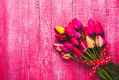 Various of colorful tulips_3 Royalty Free Stock Image