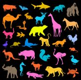 Various Colorful Zoo Mammal Shapes and Silhouettes Set Royalty Free Stock Photos