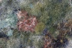 Various colors of mold. Mold growing in different colors Stock Photo