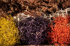 Colored decorative border plant in vase. Various colors to embellish a heather vase royalty free stock images