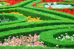 Various colourful flowers and green hedges Royalty Free Stock Photos