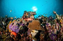 Various coral fishes, squirrelfish swim above coral reefs in Gili Lombok Nusa Tenggara Barat Indonesia underwater photo Royalty Free Stock Image