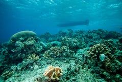 Various coral reefs in Derawan, Kalimantan, Indonesia underwater photo Stock Photography