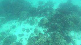 Various coral reefs and fish in Thailand underwater.  stock video footage