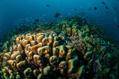 Various coral reefs in Gili, Lombok, Nusa Tenggara Barat, Indonesia underwater photo Stock Images