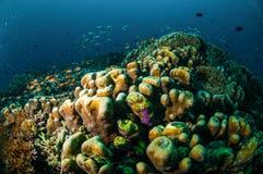 Various coral reefs in Gili, Lombok, Nusa Tenggara Barat, Indonesia underwater photo Stock Image