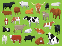 Various Cow Bull Cattle Poses Vector Illustration Stock Photo