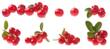 Various Cowberry. (lingonberry) isolated on white background. Vaccinium vitis-idaea royalty free stock photos