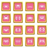 Various crab icons pink. Various crab icons set in pink color isolated vector illustration for web and any design Royalty Free Stock Image