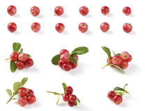 Various Cranberries. With green leaves isolated on white background. Natural source of vitamins stock photos