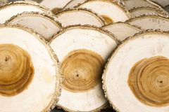 Wood. Various cross section of tree stump, use for background Stock Image