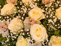 Various cut flowers, background Royalty Free Stock Image