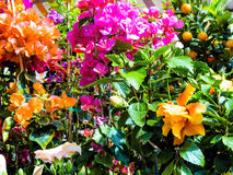Various cut flowers, background Stock Photo