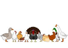 Cute poultry in a row. Various cute cartoon poultry in a row, for farm border or banner use royalty free illustration