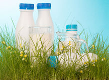 Various dairy products are in green grass Royalty Free Stock Images