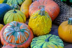 Decorative colorful pumpkins. stock images