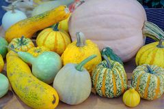 Various of decorative colorful pumpkins after autumn harvest on farmer market royalty free stock photo