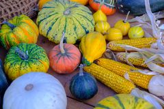 Various of decorative colorful pumpkins after autumn harvest on farmer market royalty free stock photos