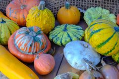 Various of decorative colorful pumpkins after autumn harvest on farmer market royalty free stock image