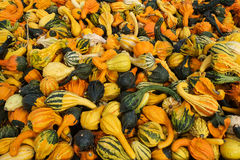 Various decorative gourds. Various orange, yellow, green, and white decorative gourds jumbled together in a pile Stock Photos