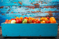 Various different color organic homegrown tomatoes in blue box a Royalty Free Stock Photo