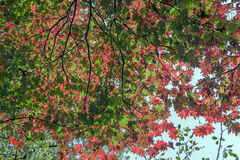 The various dimensions of leaves in autumn Stock Images