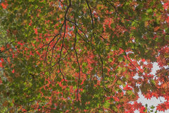 The various dimensions of leaves in autumn Stock Photography